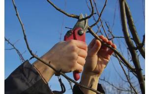 Wiosenne cięcie drzew i krzewów w ogrodzie